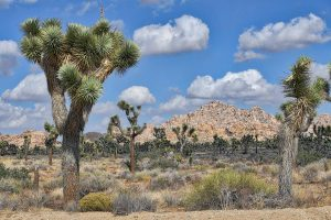 atrakcje-joshua-tree-national-park​